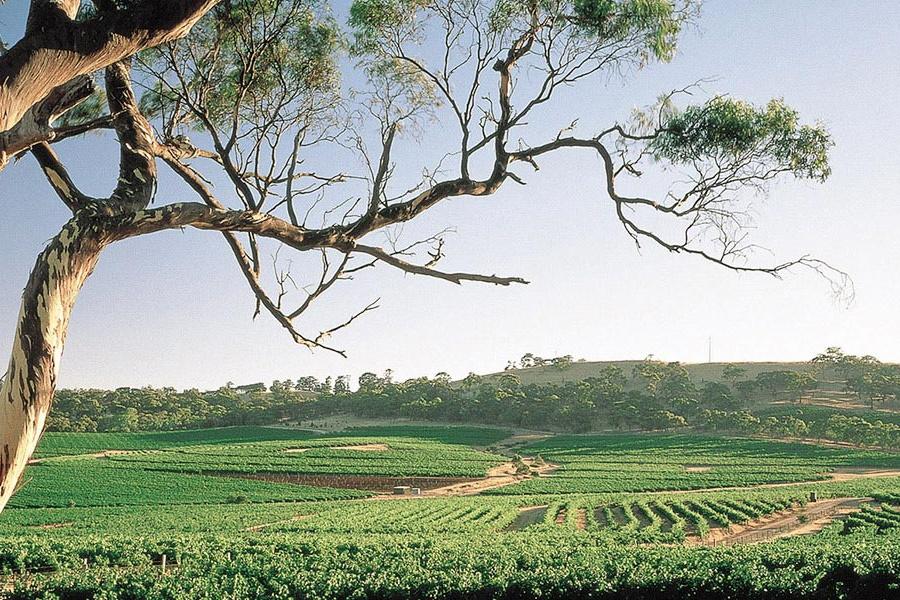 10 besten Weingüter im Clare Valley