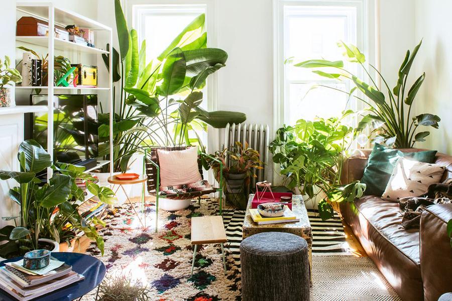 Sehen Sie, wie Ihr Zimmer voller Pflanzen aussehen würde! Tagungsbereich