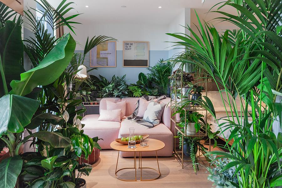 Sehen Sie, wie Ihr Zimmer voller Pflanzen aussehen würde! Lounge-Bereich