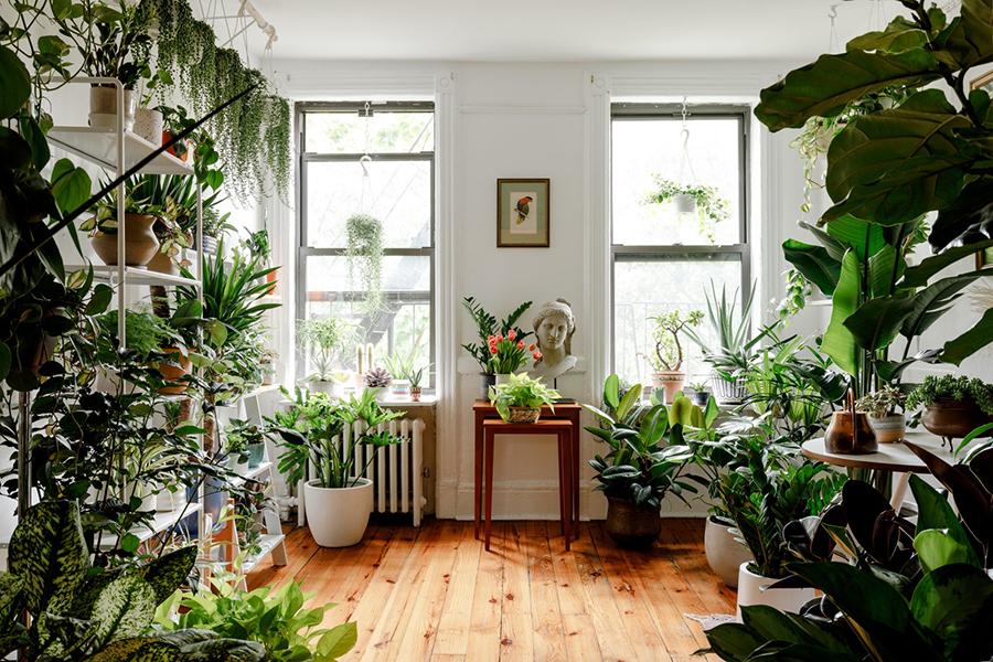 Verwandeln Sie Ihr Zimmer in einen Dschungel mit Pflanzenbalance