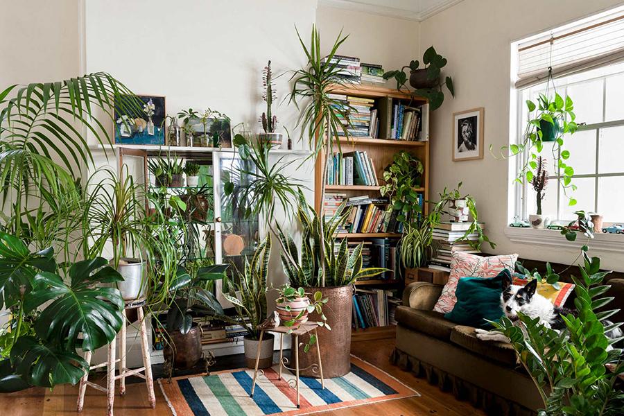 Sehen Sie, wie Ihr Zimmer voller Pflanzen aussehen würde!