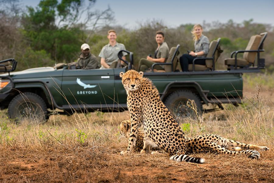 & Beyond Verbinden Sie virtuelle Safaris mit Tigern
