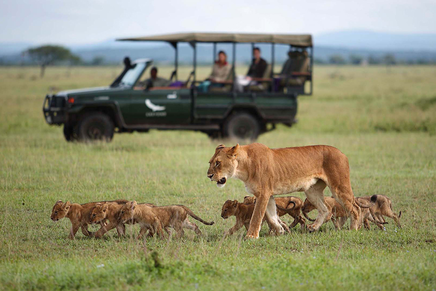 & Beyond Connect Virtuelle Safaris beobachten Löwenfamilie