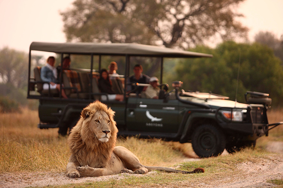 Die virtuellen Safaris von & Beyond Connect sind überraschend gut