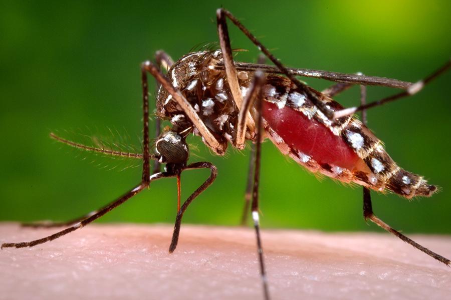 Warum manche Mücken manche Menschen anderen vorziehen