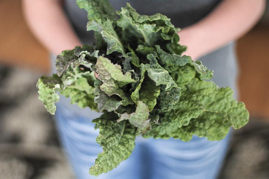 Gesundheitliche Vorteile von Grünkohl 4