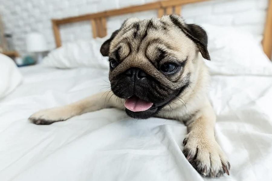 Haustiere sind jetzt in jeder Wohnung in NSW erlaubt