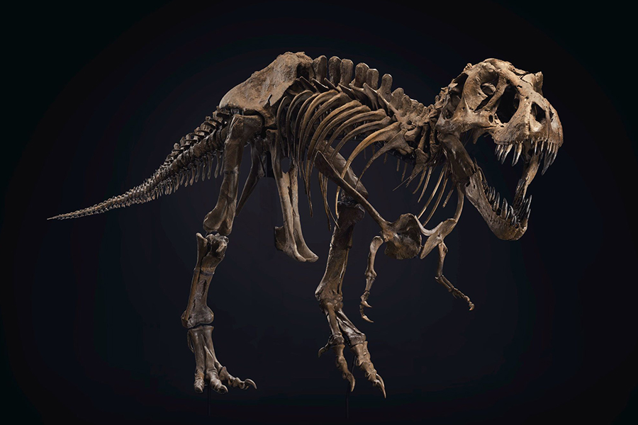 STAN the T-Rex wurde gerade zum teuersten Fossil, das jemals verkauft wurde