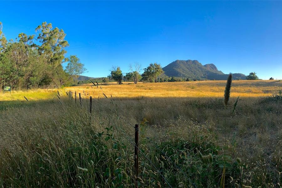 szenisches Bild der Graslandschaft