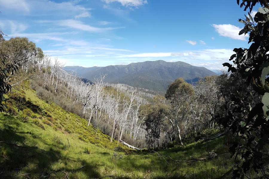 Bild von Tal und Bergen im Hintergrund