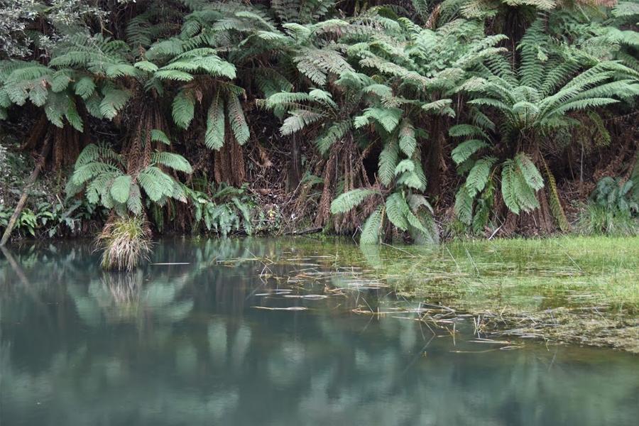 See mit tropischen Bäumen im Hintergrund