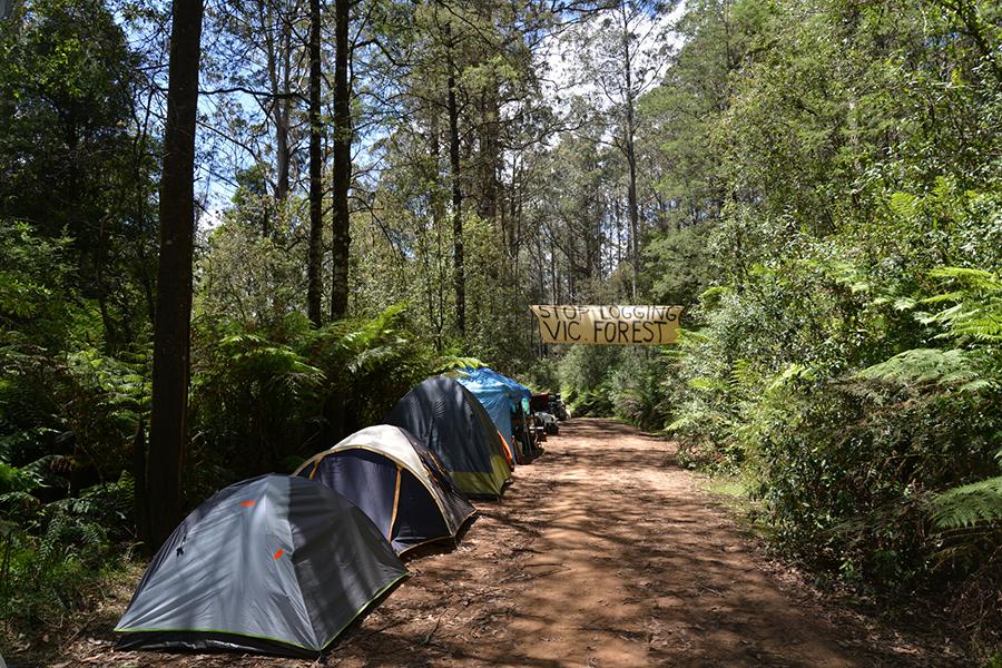Kostenlose Campingplätze im Melbourne Toolangi Recreation Reserve