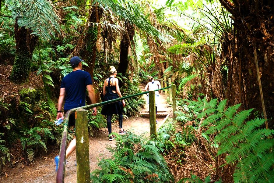 Wanderweg Ferny Creek - 1000 Schritte zu Fuß