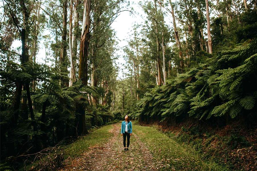 Wanderweg Warburton - Warburton Redwood Forest