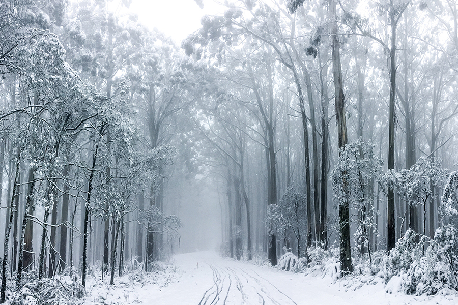 Mount Donna Buang Melbourne Schnee