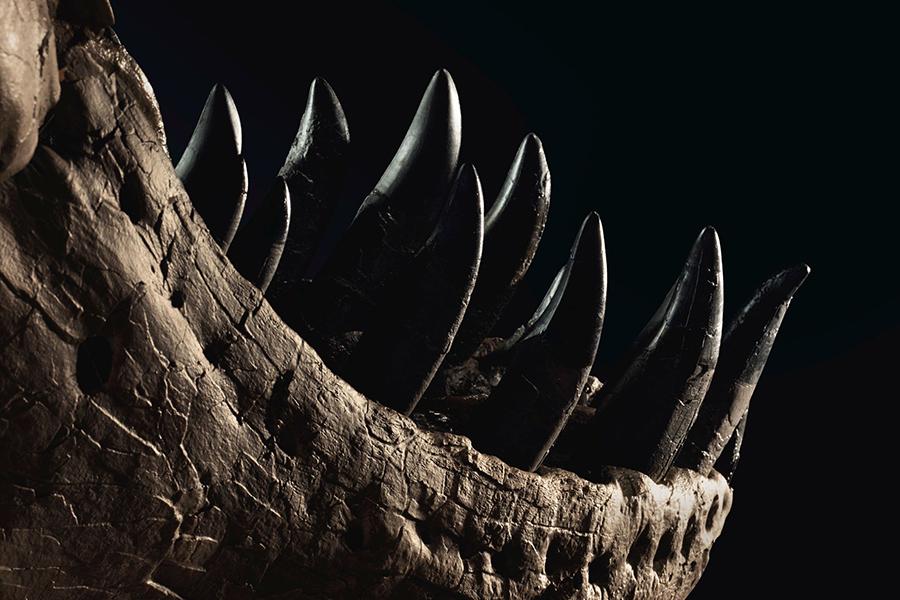 Das Leben von Stan T Rex Zähnen