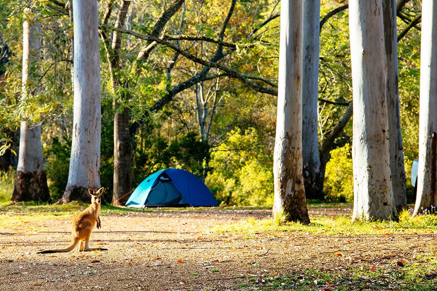 Beste Campingplätze in der Nähe von Brisbane Peach Trees Camping Area