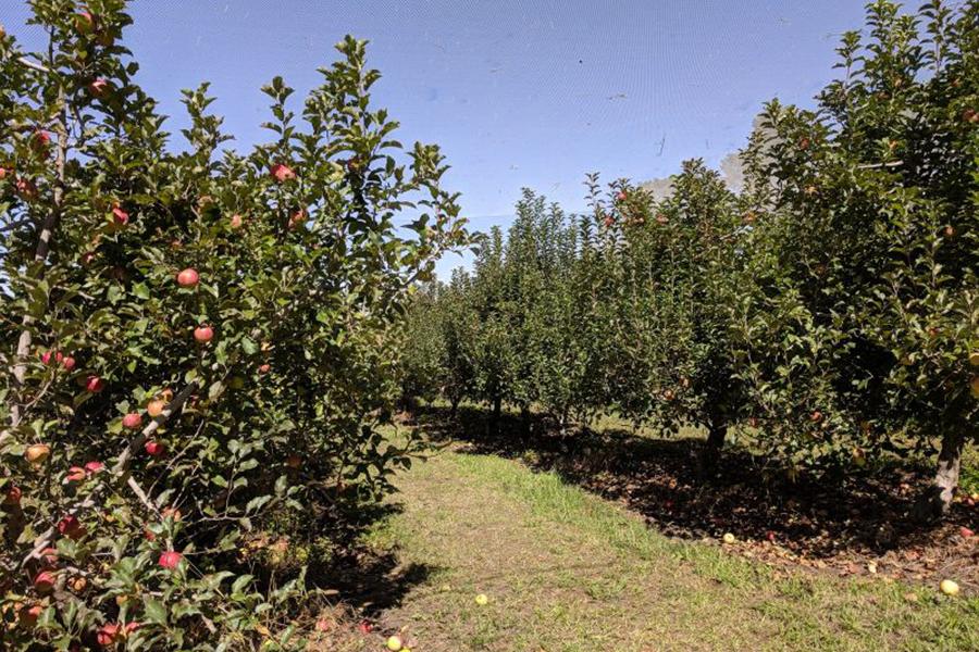 Pine Crest Best Family Fruit Picking Sydney