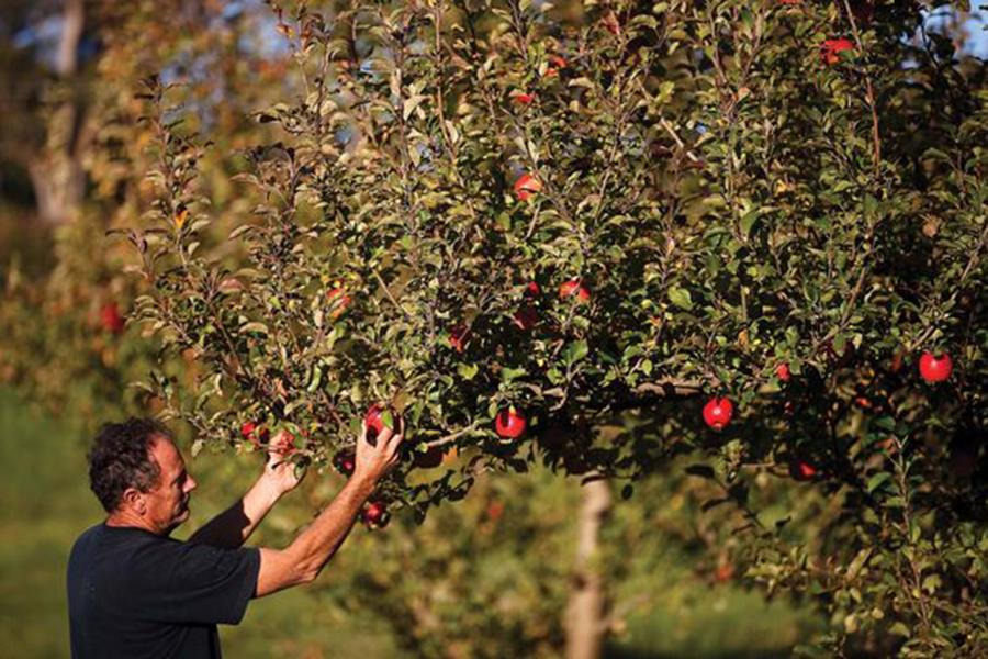 Mount Tomah Botanic Gardens Best Family Fruit Picking Sydney