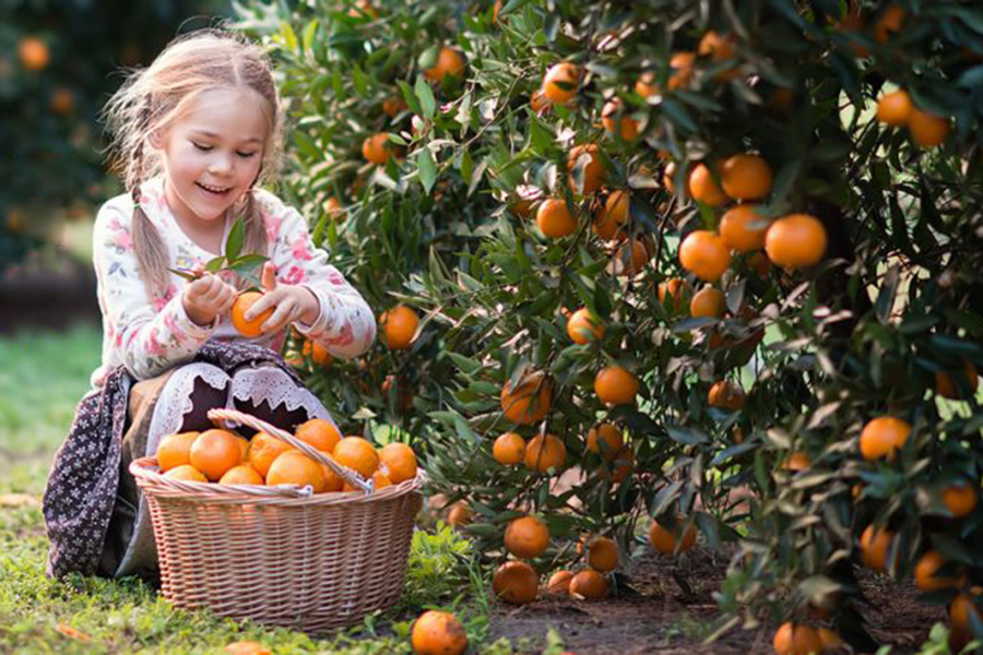 Fords Farm Best Family Fruit Picking Sydney