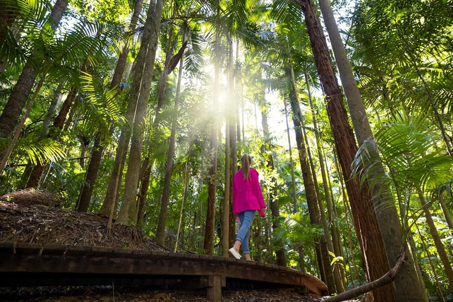 Beste Wanderwege in Brisbane Morelia Wanderweg, Mt. Nebo, D'Aguilar National Park