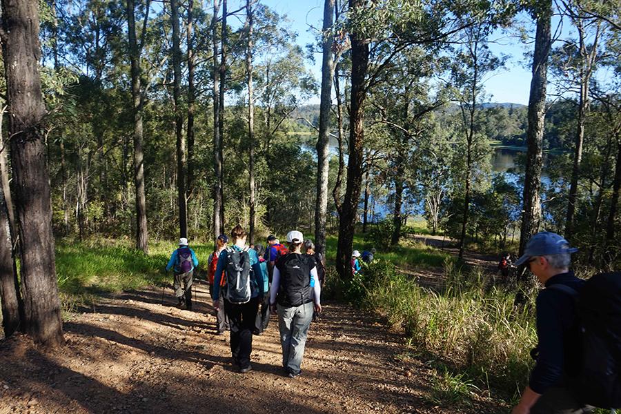 Beste Wanderwege in Brisbane Araucaria Track, Brisbane Forest Park