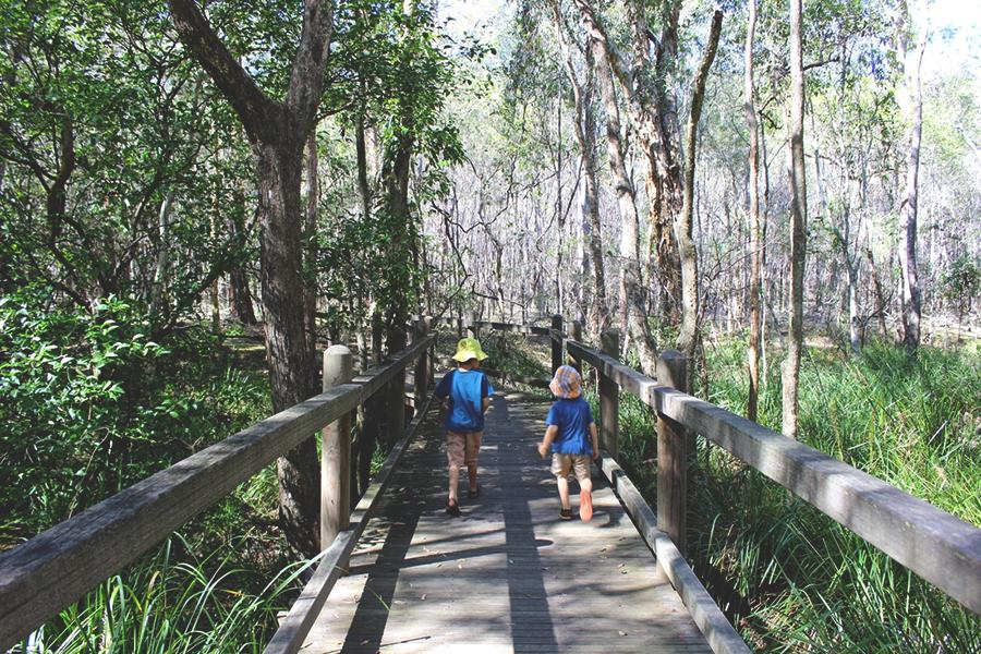 Beste Wanderwege in Brisbane Stockyard Creek Wanderweg, Brisbane Koala Bushlands