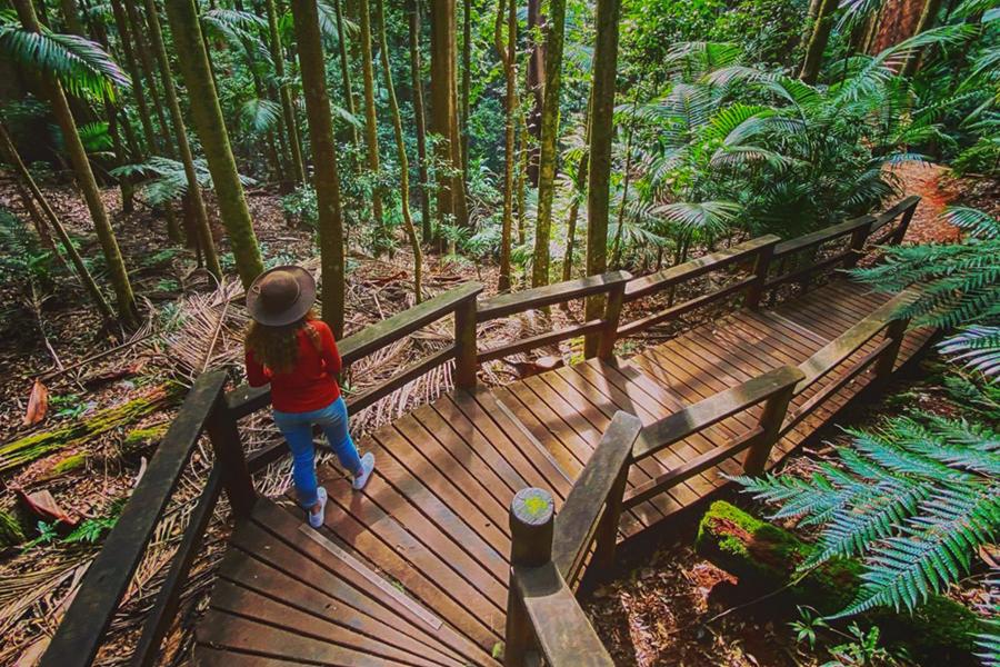 17 besten Wanderwege in Brisbane